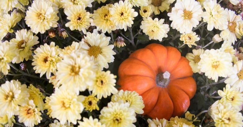 pumpkin&flower